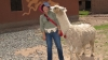 Jeanne and the Llama, Cusco